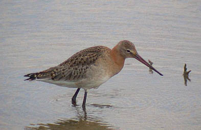 BlackWit2CL1Sep02.JPG (20077 bytes)