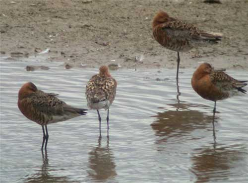 BlackWits4_CollegeLake_040704x.jpg (28148 bytes)